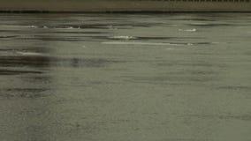 Επιπλέοντα σώματα επιπλέοντος πάγου πάγου στο νερό απόθεμα βίντεο