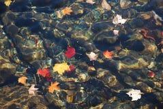 επιπλέοντα φύλλα φθινοπώρ& Στοκ φωτογραφία με δικαίωμα ελεύθερης χρήσης