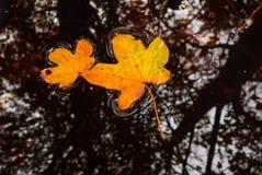 επιπλέοντα φύλλα Στοκ εικόνα με δικαίωμα ελεύθερης χρήσης