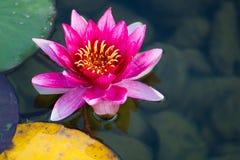επιπλέον λουλούδι Στοκ φωτογραφίες με δικαίωμα ελεύθερης χρήσης