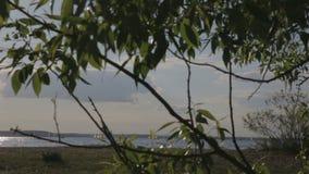 Επιπλέον σώμα γιοτ στη λίμνη μια ηλιόλουστη ημέρα απόθεμα βίντεο