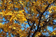 Επιπλέον σώμα κάτω όπως τα φύλλα φθινοπώρου Στοκ φωτογραφία με δικαίωμα ελεύθερης χρήσης