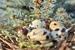 Επισημασμένα αυγά σε μια άγρια φύση φωλιών Στοκ Φωτογραφίες