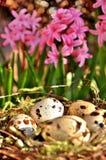 Επισημασμένα αυγά σε μια φωλιά και ρόδινα λουλούδια στο υπόβαθρο Στοκ εικόνα με δικαίωμα ελεύθερης χρήσης