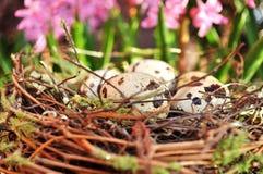Επισημασμένα αυγά σε μια φωλιά και ρόδινα λουλούδια στο υπόβαθρο Στοκ φωτογραφία με δικαίωμα ελεύθερης χρήσης