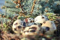 Επισημασμένα αυγά σε μια φωλιά Στοκ Εικόνα