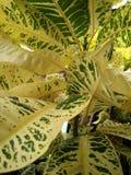 Επισημασμένα φύλλα Στοκ Φωτογραφία