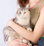 Επισημασμένη γάτα στα χέρια ενός έφηβη Στοκ εικόνα με δικαίωμα ελεύθερης χρήσης