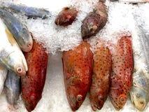 Επισημασμένο Grouper κοραλλιών (κόκκινο) και σολομός Threadfin στον πάγο Στοκ Εικόνες
