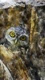 Επισημασμένο owlet που κοιτάζει περίεργα από τη φωλιά τους στο δέντρο κοίλο ελεύθερη απεικόνιση δικαιώματος
