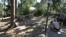 Επισκέπτες στο ζωολογικό κήπο που θαυμάζει τους δαχτυλίδι-παρακολουθημένους κερκοπίθηκους απόθεμα βίντεο