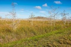 Επισκιασμένο φαλακρό δέντρο κυπαρισσιών, Everglades, Φλώριδα Στοκ εικόνα με δικαίωμα ελεύθερης χρήσης