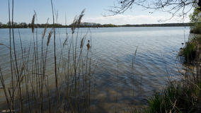 Επισκόπηση της λίμνης από πίσω από τους καλάμους Στοκ εικόνα με δικαίωμα ελεύθερης χρήσης