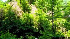 Επισκόπηση του δάσους μια ηλιόλουστη ημέρα απόθεμα βίντεο