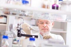 Επιστήμονας ζωής που ερευνά στο εργαστήριο Στοκ Εικόνες