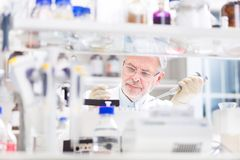 Επιστήμονας ζωής που ερευνά στο εργαστήριο Στοκ φωτογραφία με δικαίωμα ελεύθερης χρήσης