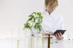 Επιστήμονας που ελέγχει ένα φαρμακευτικό πετρέλαιο cbd σε ένα εργαστήριο με μια ταμπλέτα στοκ εικόνες με δικαίωμα ελεύθερης χρήσης