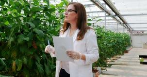 Επιστήμονας που εξετάζει τη μελιτζάνα στο θερμοκήπιο 4k φιλμ μικρού μήκους