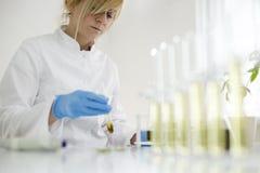Επιστήμονας που εργάζεται με το φαρμακευτικό πετρέλαιο cbd σε ένα εργαστήριο με έναν εξοπλισμό γυαλιού στοκ φωτογραφία με δικαίωμα ελεύθερης χρήσης