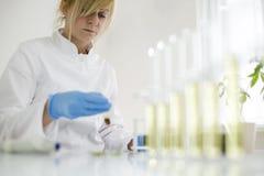 Επιστήμονας που εργάζεται με το φαρμακευτικό πετρέλαιο cbd σε ένα εργαστήριο με έναν εξοπλισμό γυαλιού στοκ φωτογραφίες