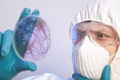 Επιστήμονας που κρατά ένα petri πιάτο με τα κύτταρα ιών στοκ εικόνες