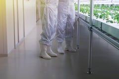 Επιστήμονας στο καθαρό κοστούμι με το υδροπονικό σύστημα στοκ εικόνα με δικαίωμα ελεύθερης χρήσης