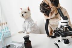 Επιστήμονες σκυλιών στο εργαστήριο Στοκ Εικόνα
