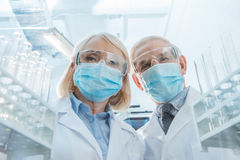 Επιστήμονες στις προστατευτικές μάσκες και γυαλιά που στέκονται μεταξύ των κενών σωλήνων δοκιμής Στοκ εικόνα με δικαίωμα ελεύθερης χρήσης