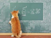 Επιστημονική γάτα Στοκ φωτογραφίες με δικαίωμα ελεύθερης χρήσης