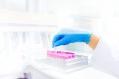 Επιστημόνων γιατρών δείγμα, πειράματα και ανάλυση εκμετάλλευσης υγρό του υγρού στους πλαστικούς σωλήνες στοκ φωτογραφία με δικαίωμα ελεύθερης χρήσης