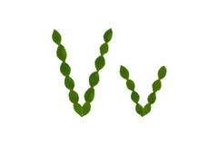 Επιστολή Β, αλφάβητο που γίνεται από τα πράσινα φύλλα Στοκ Εικόνες