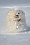 Επιτέλους χιόνι Στοκ εικόνα με δικαίωμα ελεύθερης χρήσης