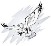 επιτιθειμένος αετός Στοκ Εικόνες