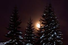 επιτραπέζια χρήση φωτογραφιών νύχτας τοπίων εγκαταστάσεων εικόνας ανασκόπησης όμορφη Στοκ Φωτογραφία