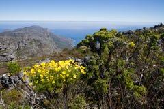 Επιτραπέζιο βουνό, Καίηπ Τάουν στοκ εικόνα με δικαίωμα ελεύθερης χρήσης
