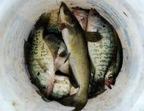 Επιτυχής αλιεία Στοκ Εικόνα