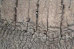 Επιφάνεια δέντρων καρύδων Στοκ Εικόνα