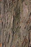 Επιφάνεια δέντρων Στοκ φωτογραφία με δικαίωμα ελεύθερης χρήσης