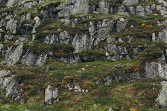 Επιφάνεια βράχοι με το πράσινες βρύο και τη λειχήνα Στοκ Εικόνα