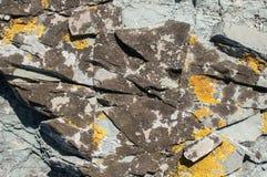 Επιφάνεια βράχου θάλασσας με την κινηματογράφηση σε πρώτο πλάνο λειχήνων Στοκ εικόνα με δικαίωμα ελεύθερης χρήσης
