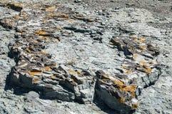 Επιφάνεια βράχου θάλασσας με την κινηματογράφηση σε πρώτο πλάνο λειχήνων Στοκ φωτογραφίες με δικαίωμα ελεύθερης χρήσης