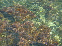 επιφάνεια θάλασσας κρυ&sig Στοκ Εικόνες
