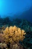 επιφάνεια κοραλλιογε&nu Στοκ εικόνα με δικαίωμα ελεύθερης χρήσης