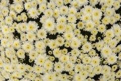 Επιφάνεια λουλουδιών Στοκ Φωτογραφίες