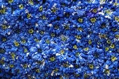 Επιφάνεια που καλύπτεται με τα μπλε χρυσάνθεμα Στοκ φωτογραφίες με δικαίωμα ελεύθερης χρήσης
