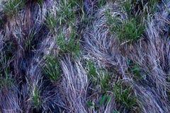 Επιφάνεια της γης, που καλύπτεται με τα σχέδια της νέας πράσινης χλόης Στοκ εικόνες με δικαίωμα ελεύθερης χρήσης