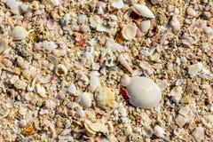Επιφάνεια της παραλίας ποικίλων κοχυλιών, υπόβαθρο σύστασης στοκ εικόνα με δικαίωμα ελεύθερης χρήσης