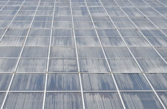 Επιφάνεια τοίχων θερμοκηπίων στην προοπτική Στοκ Εικόνα