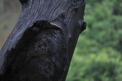 Επιφάνεια του ξυλάνθρακα Στοκ Εικόνες