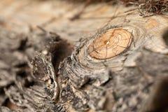 Επιφάνεια του παλαιού κορμού πεύκων Κούτσουρο πεύκων Όμορφος κόμβος πεύκων Κινηματογράφηση σε πρώτο πλάνο ενός κορμού πεύκων στοκ εικόνα